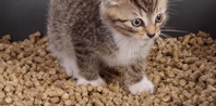 Cat-Litter-Pellets