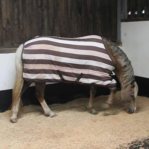 Horse-Pellets